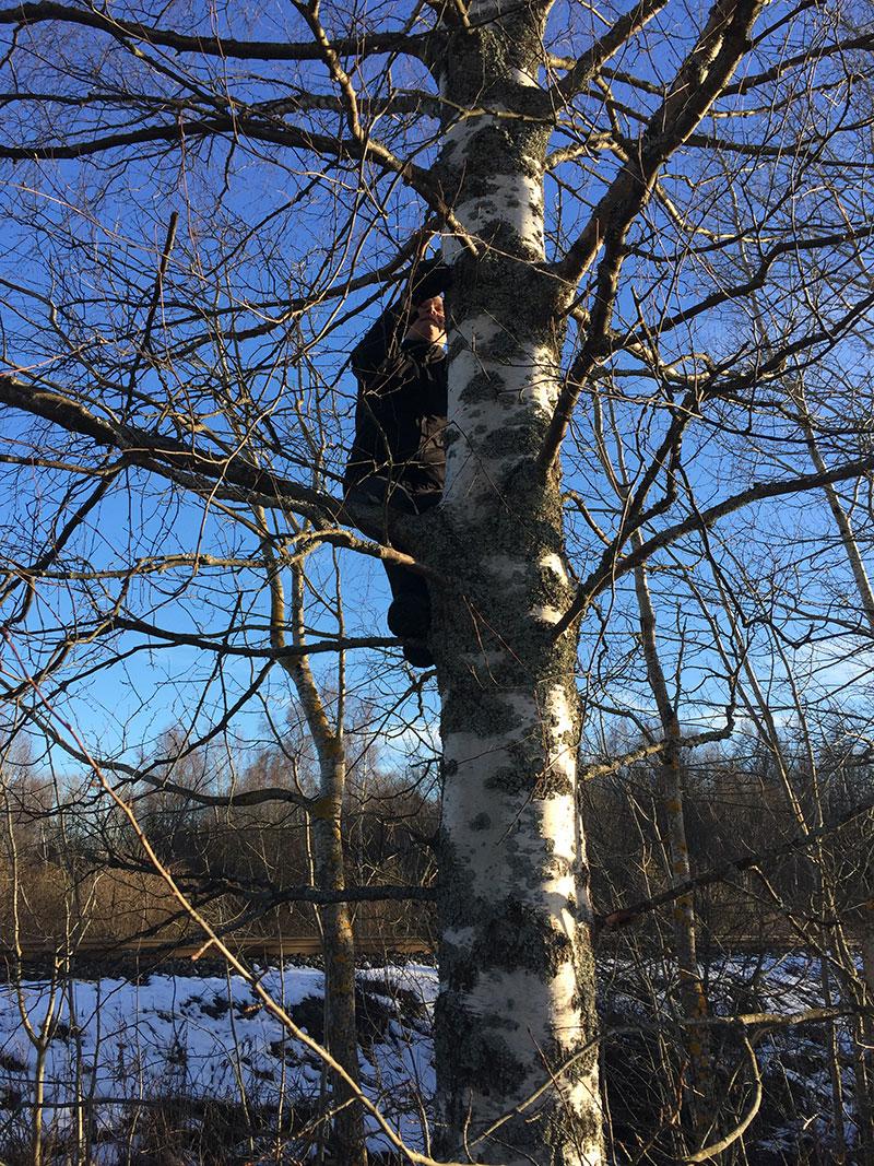 Puuhun piilotettu geokätkö