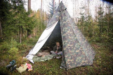 Kotateltta metsässä