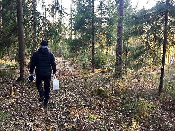 Espoon keskuspuiston metsää