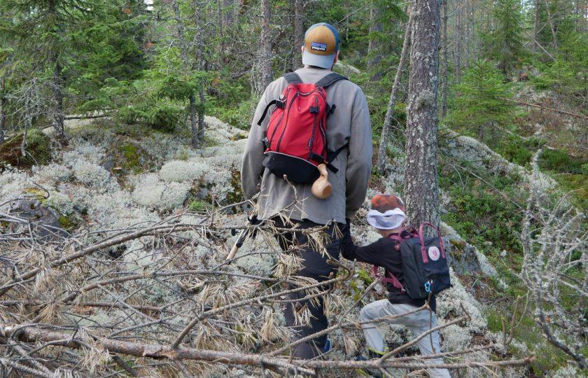 Muksut + metsä = danger zone?