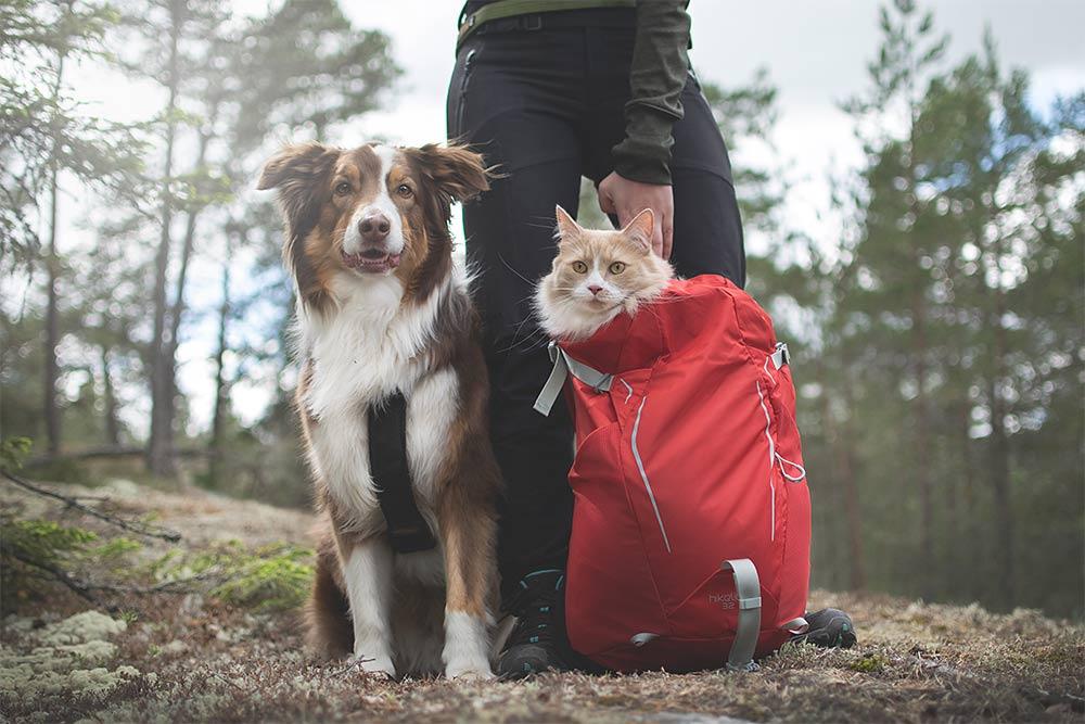koiran ja kissan kanssa retkellä