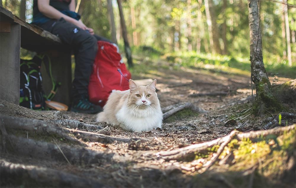 kissan kanssa retkellä