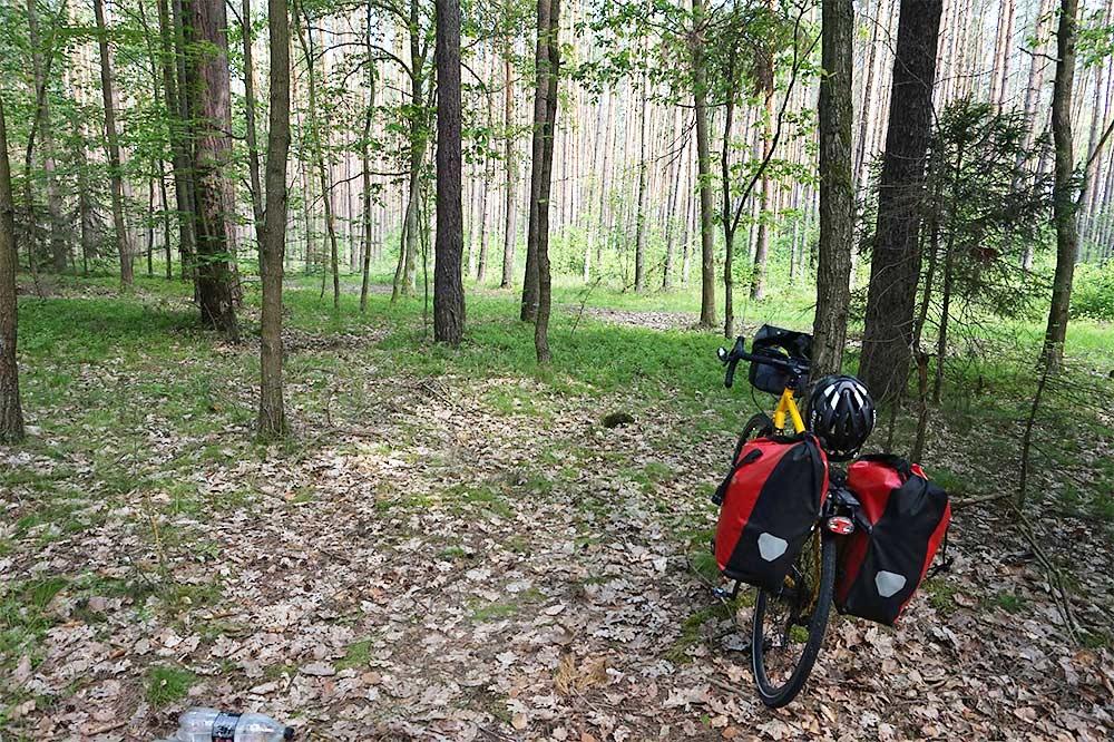 leiripaikka metsän suojassa