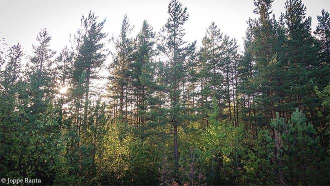 suunnan katsominen puiden oksista
