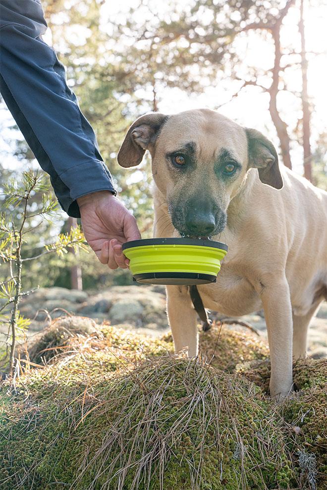 juoma-astia koiralle retkellä