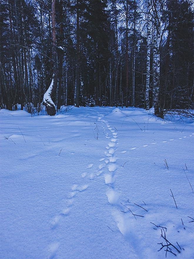 jäljet lumessa
